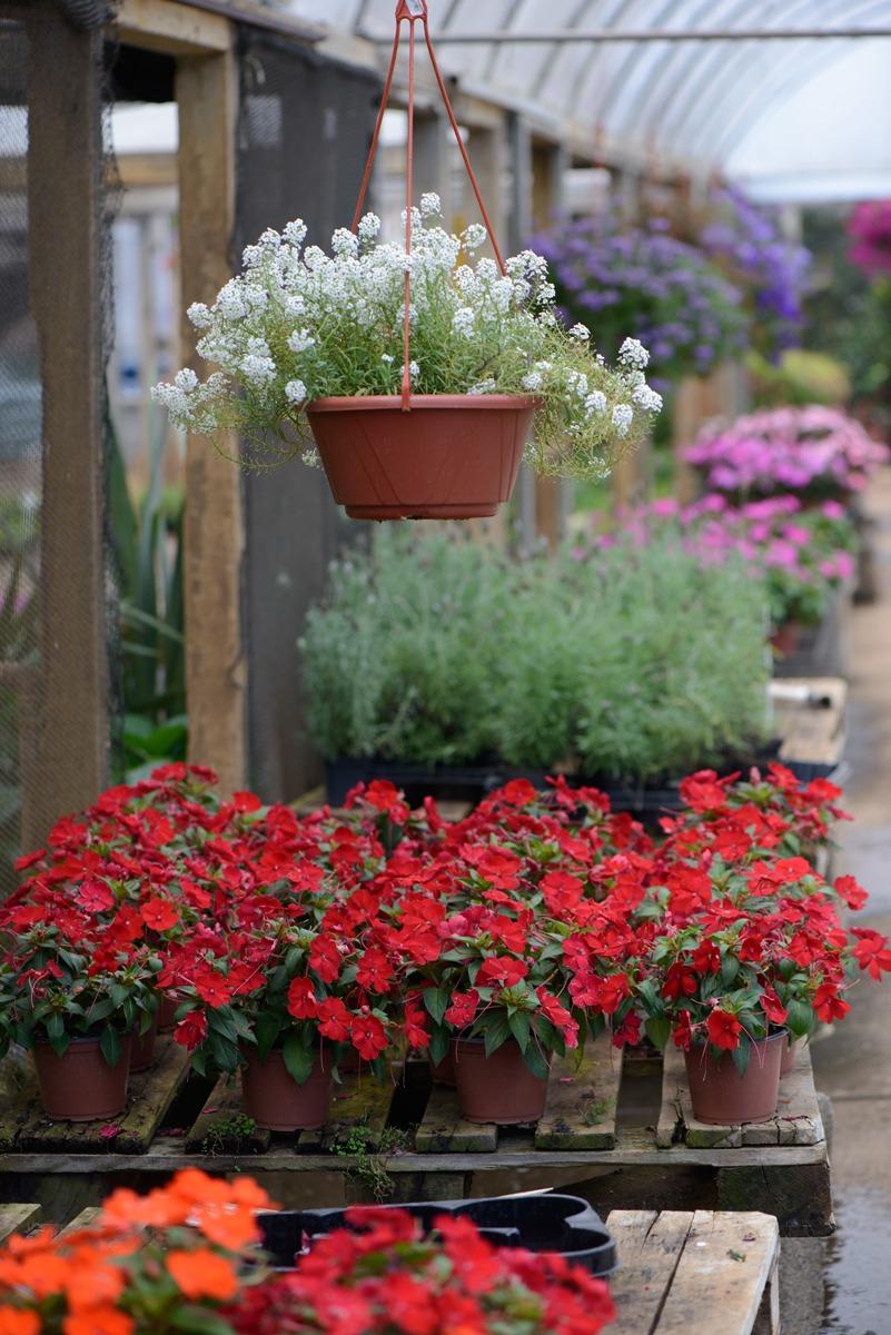 Gartencenter Úrsula 1