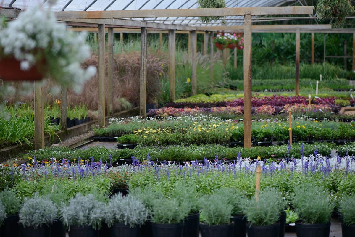 Gartencenter Úrsula 3