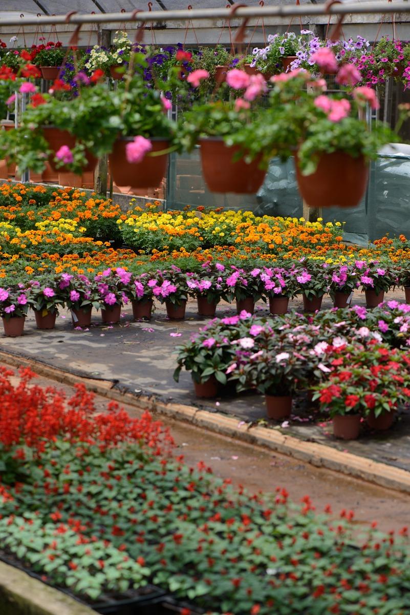 Gartencenter Úrsula 4